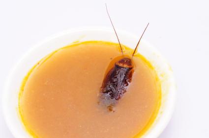 Roach Soup
